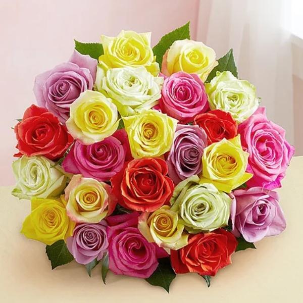 24 Mixed Roses
