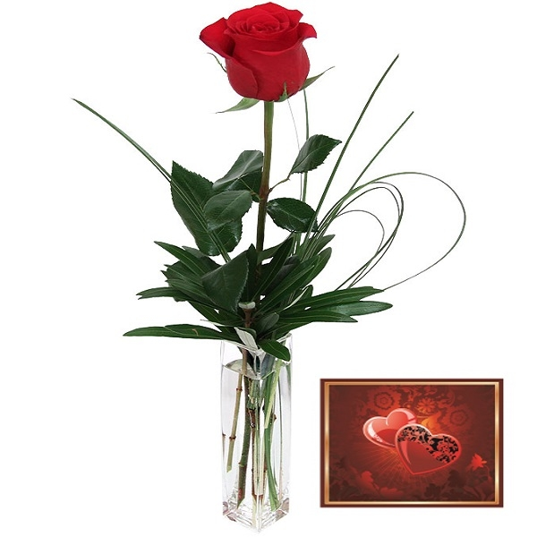 Red rose and card
