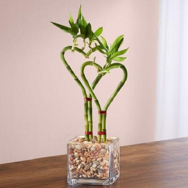 Double Heart Shaped Bamboo