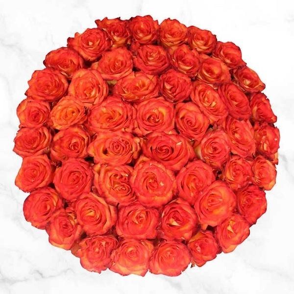 50 stems of Bicolor Orange Rose