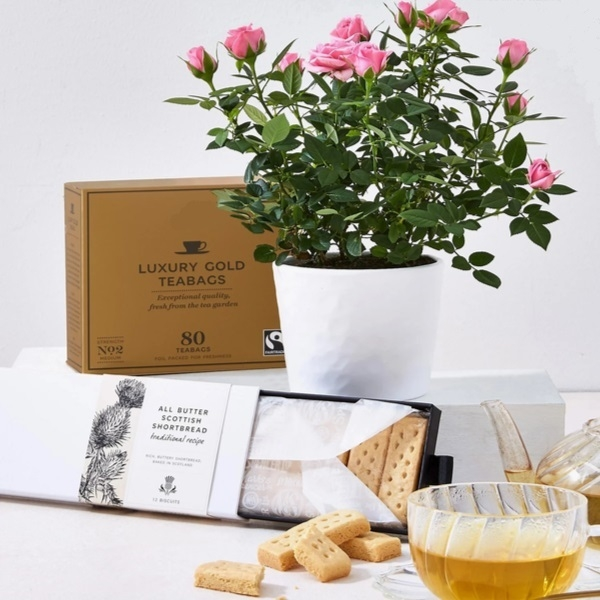 Rose Plant with Gold Tea and Biscuits