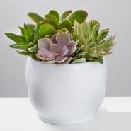 Unique Succulent Garden