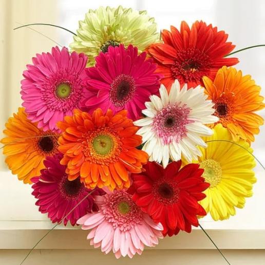 Gerbera Bouquet