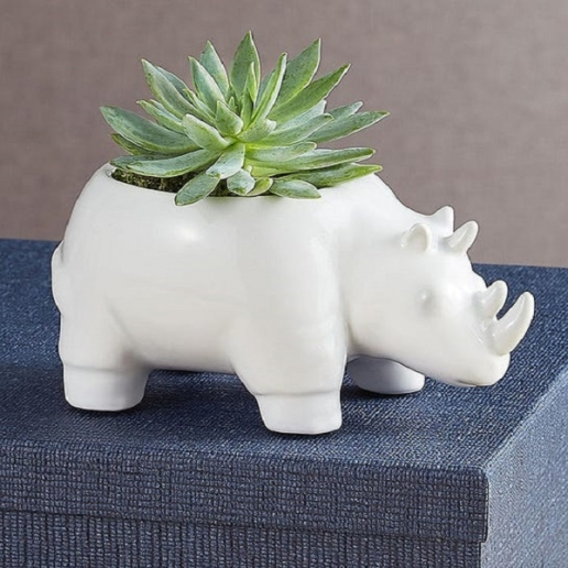 Safari Rhino Succulents