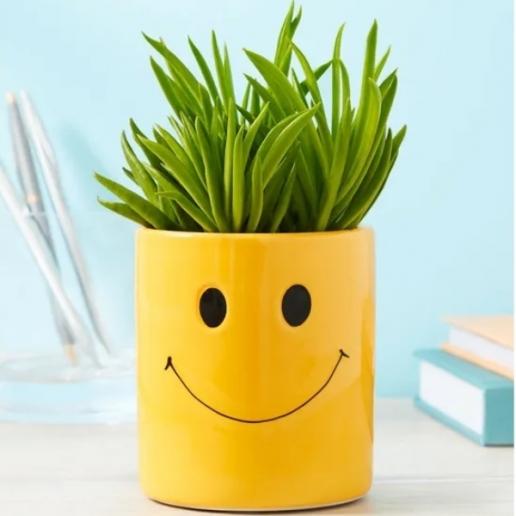 Smiley Succulent